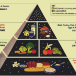 1992-Food-Pyramid