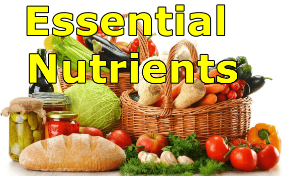 Essential Nutrients List