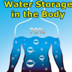 Water-Storage-in-the-Body