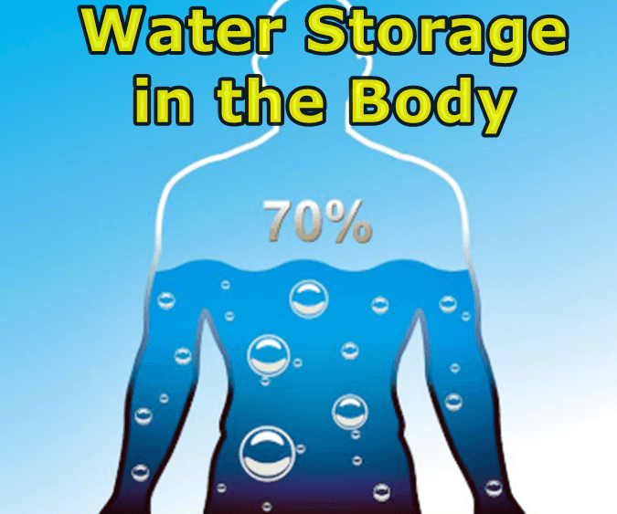 How much water does our body have
