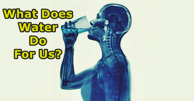 What is the importance of water?