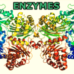 types of enzymes