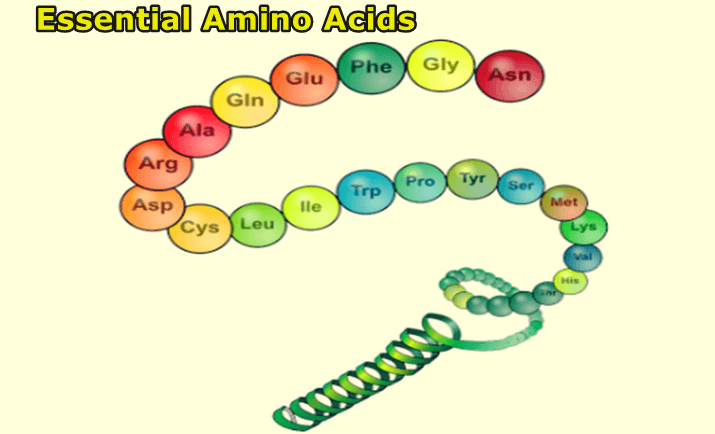 essential-amino-acids