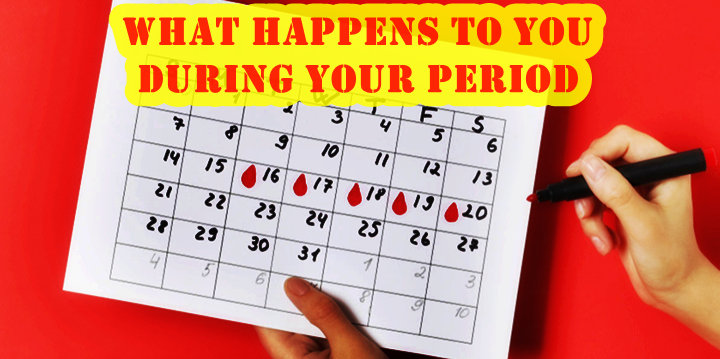 During Your Period What Happens to Your Body?