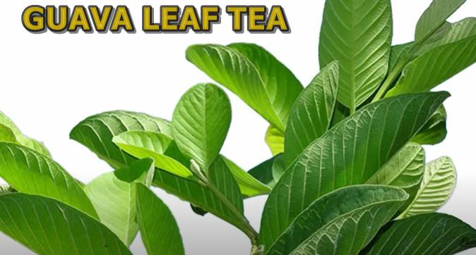 Guava Tea Recipe