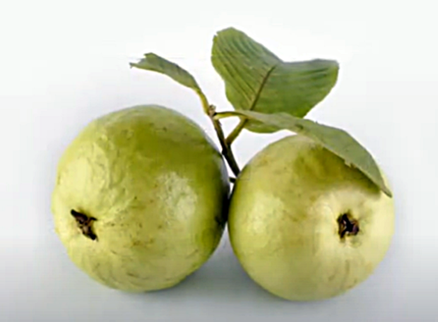 WHAT IS GUAVA FRUIT?