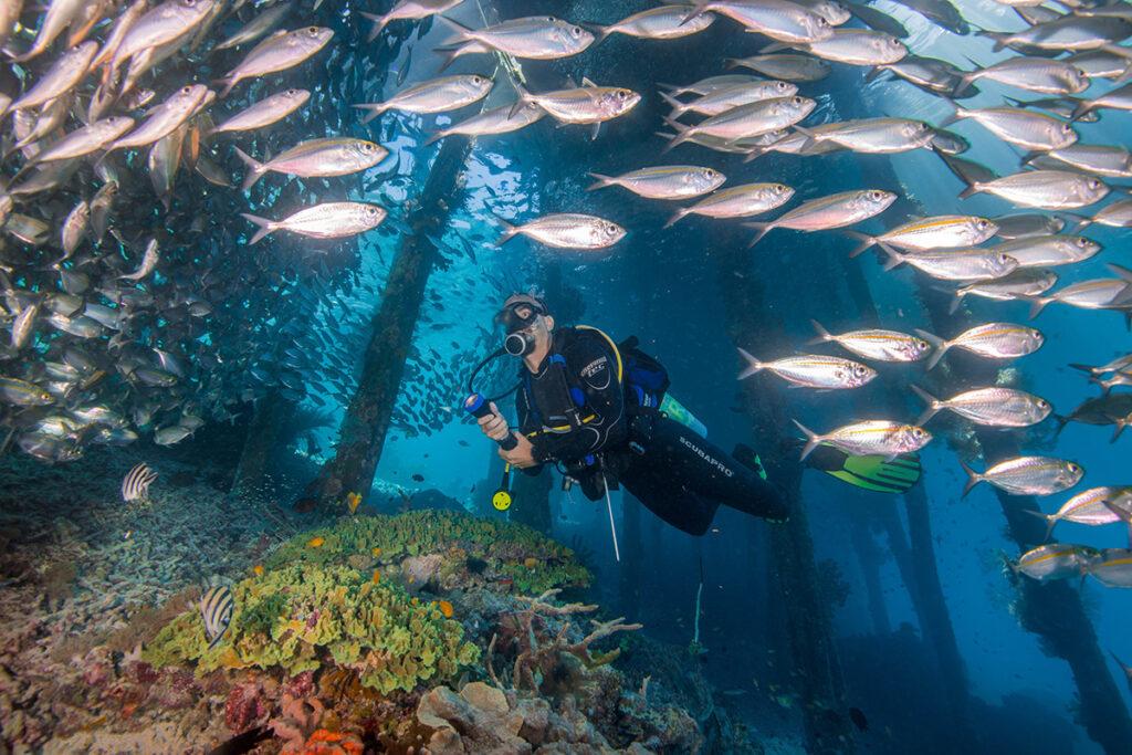 diving cape kri indonesia